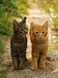 LATI AND LATO *Reviving two kitties File