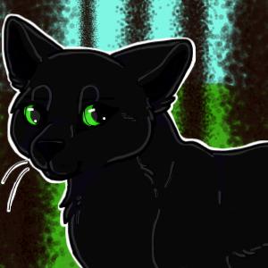 Crni macak
