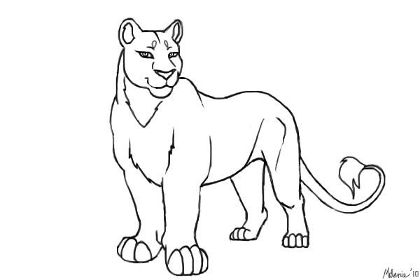 Female Lion Drawings Sketch Coloring Page