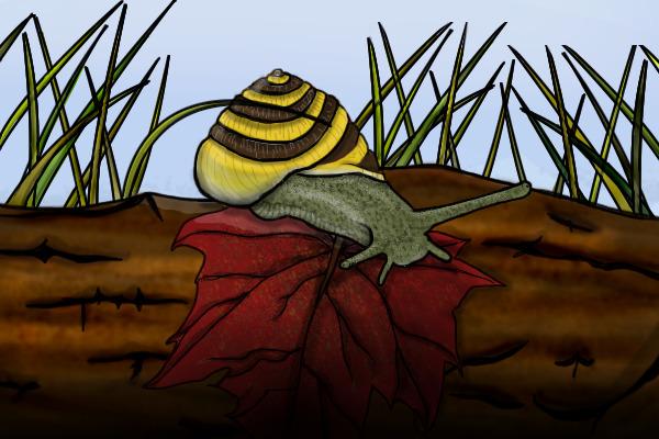 snail chat