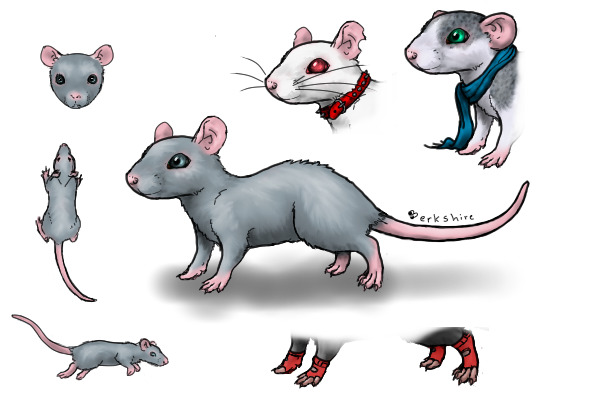 Dumbo Rat Drawing Create-a-rat Ref Sheet by