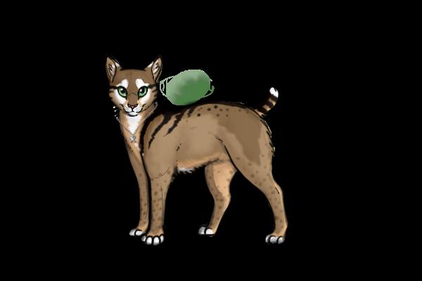Shadowkit Warrior Cats