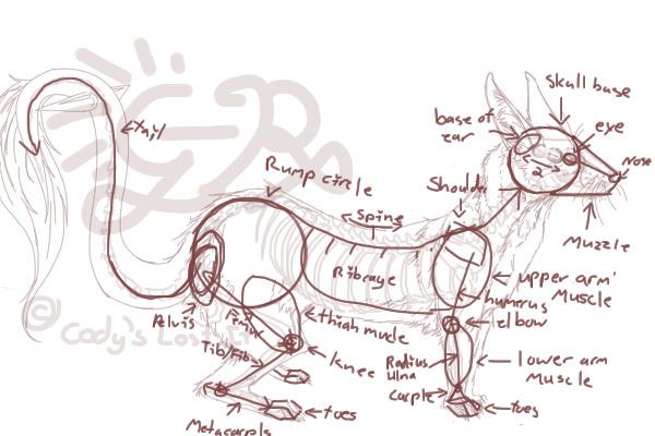 View topic - Ferret Anatomy Part3 - Chicken Smoothie