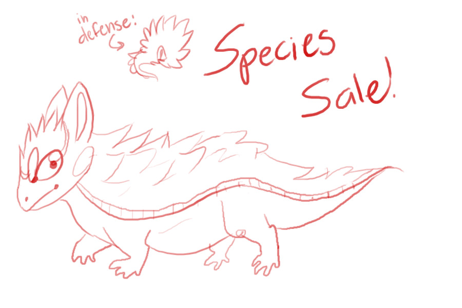 View topic - Armadillo Lizards/ Species sale - Chicken Smoothie