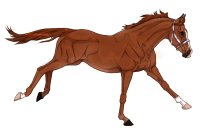 Thoroughbred Adopt