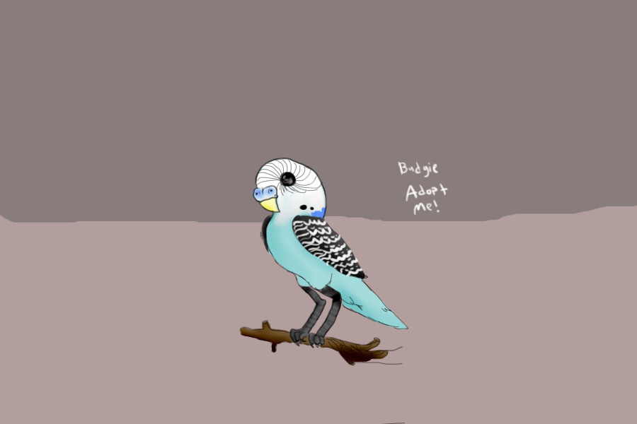 View topic - Budgie adopt - Chicken Smoothie