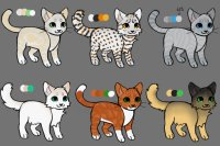 Cat designs for sale