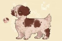 petit brazilian beaing spaniels // entry one
