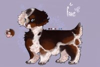 petit brazilian beaing spaniels // entry two
