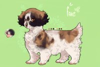 petit brazilian beaing spaniels // entry three