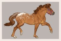 Ferox Welsh #416 frosted chestnut appaloosa