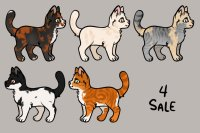 Some Cats 4 Sale