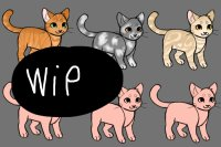 Wip catte adopts