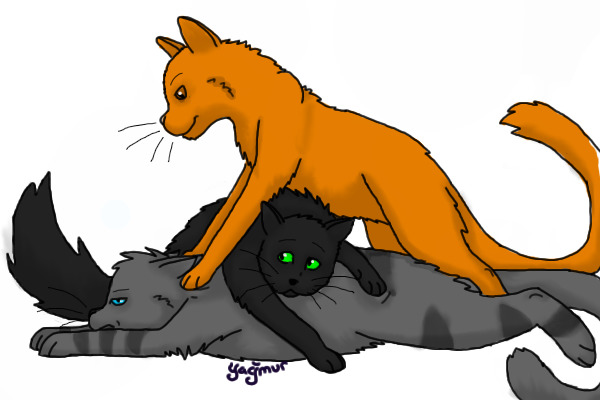 Warriors Cats Lionblaze Hollyleaf And Jayfeather By Warriors4ever