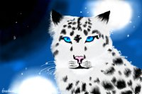 Snow leopard, in the snow! (please move to intermediate :D)