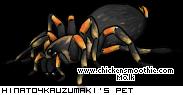 http://www.chickensmoothie.com/pet/2446970&trans=1.jpg