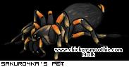 http://www.chickensmoothie.com/pet/2563016&trans=1.jpg