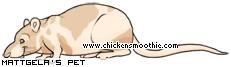 Chickensmoothie.com - Page 2 475128
